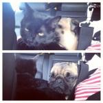 scenes from the road: snuggle buddies