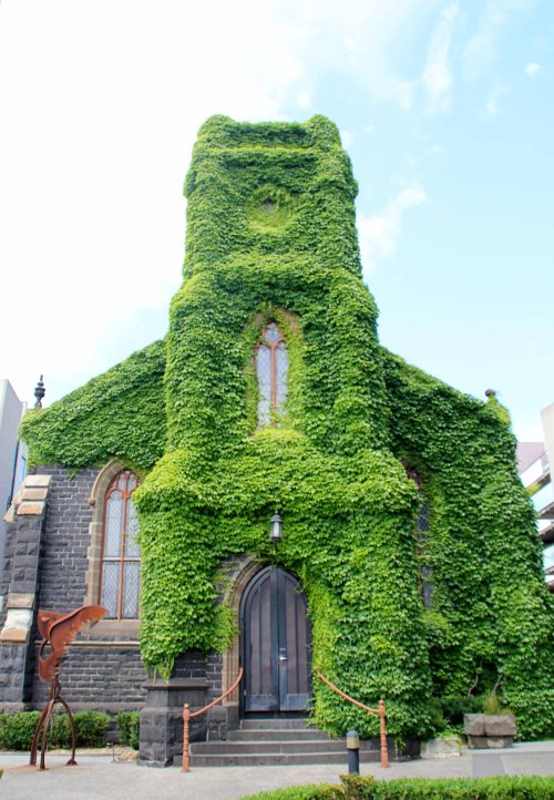 gorgeous ivy covered church in st. kilda